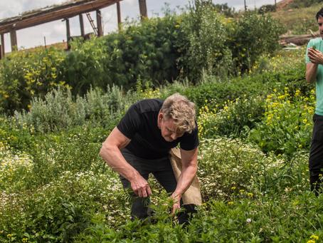 Cruzando los límites de la cocina: Gordon Ramsay llega a National Geographic