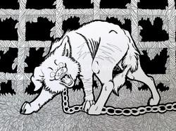 Death Row Shelter Dog