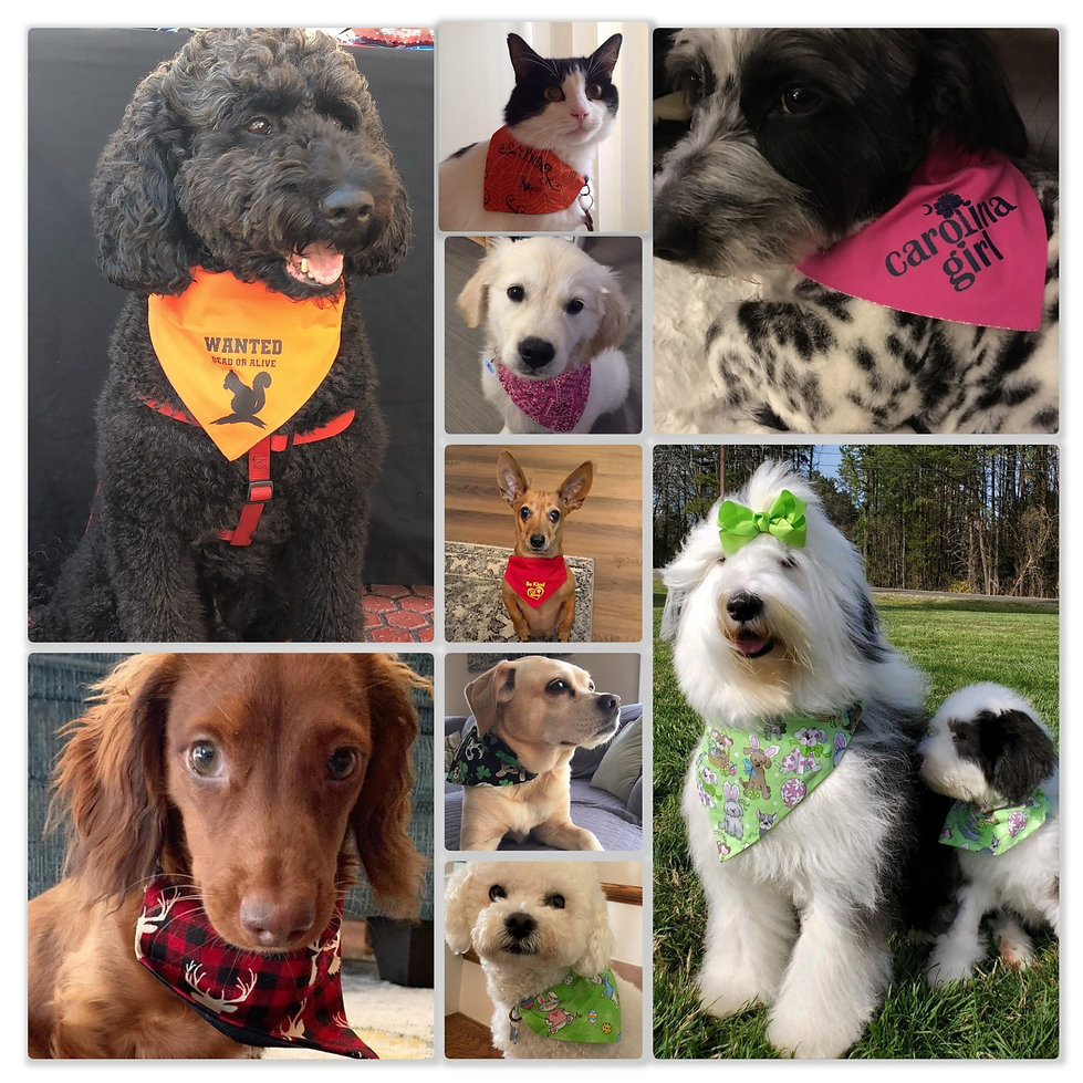 Pet%20Collage%20for%20Website%20-%202020