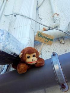 zanimot-BIOREGION-XavierDaniel-120210901-StPierre.jpg