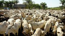 Qual o verdadeiro impacto do consumo/produção de carne?