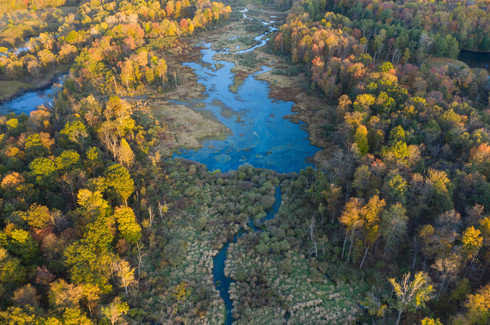 Muddy Creek I
