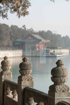 Summer Palace Lotus