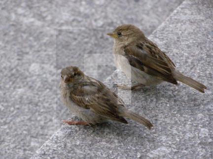 Reichstag Birds
