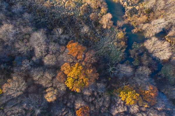 Lake Arthur Swamp Run
