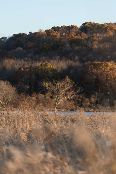 Lake Arthur Tree