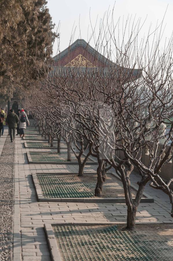Summer Palace Trees