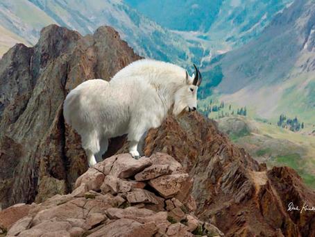 The Golden Goat of Ogre Valley