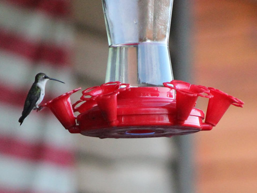 10 Interesting Facts about Hummingbirds