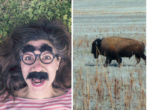 What do Buffalo and Moustaches have in common?