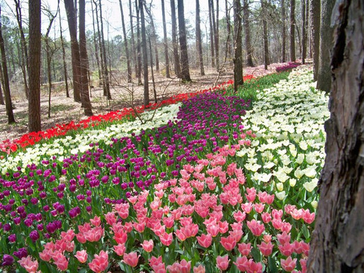 Five reasons you must take that special someone to Garvan Woodland Gardens