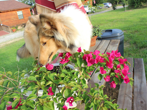 Stop and smell the flowers