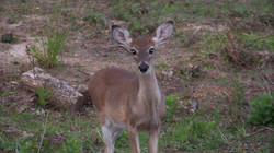 Critters in Arkansas