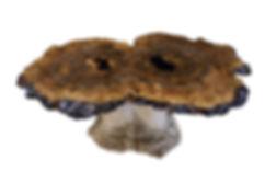 12.1.18 Mushroom 2 masked.jpg