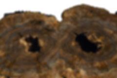 12.1.18 Mushroom 3 masked.jpg