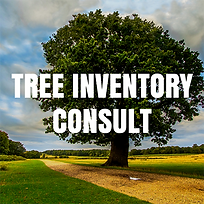 TREE_INVENTORY_CONSULT.png
