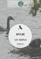 Les oiseaux (activité 1)