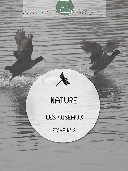 LES OISEAUX - Activité 2