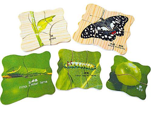 蝴蝶成長拼圖