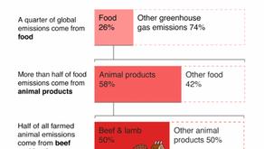 Ups I didn't know that: Carbon Footprint - Yüksel Yasemin Altıntaş