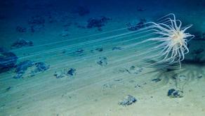 Deep Sea Mining: An Overview - Hande Mert