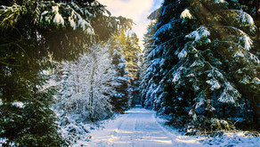 The Haanja Forest: Estonia's Logging Problem - Mihael Gubas