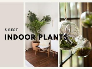 5 Best Indoor Plants You Must Have