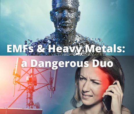 EMFs & Heavy Metals: a Dangerous Duo