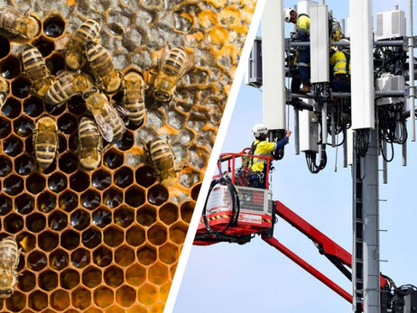 ELECTROMAGNETIC FREQUENCIES ARE DAMAGING TO OUR BEES: HERE'S WHAT YOU SHOULD KNOW