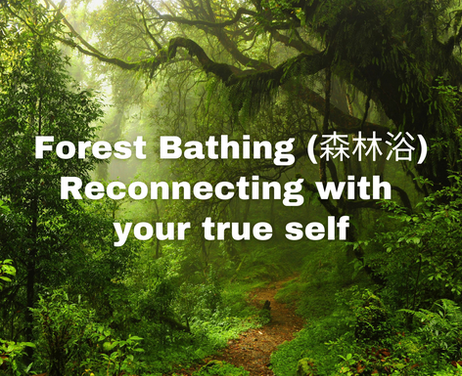 Forest Bathing: Reconnecting with your true self