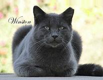 12 December 2021 Winston.jpg