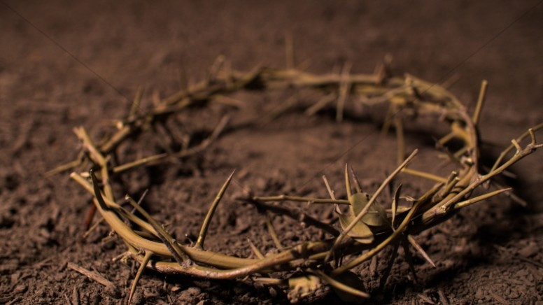 bolem crown of thorns.jpg