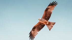 Hawk Medicine