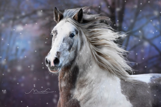 """Spirit Of Winter"""