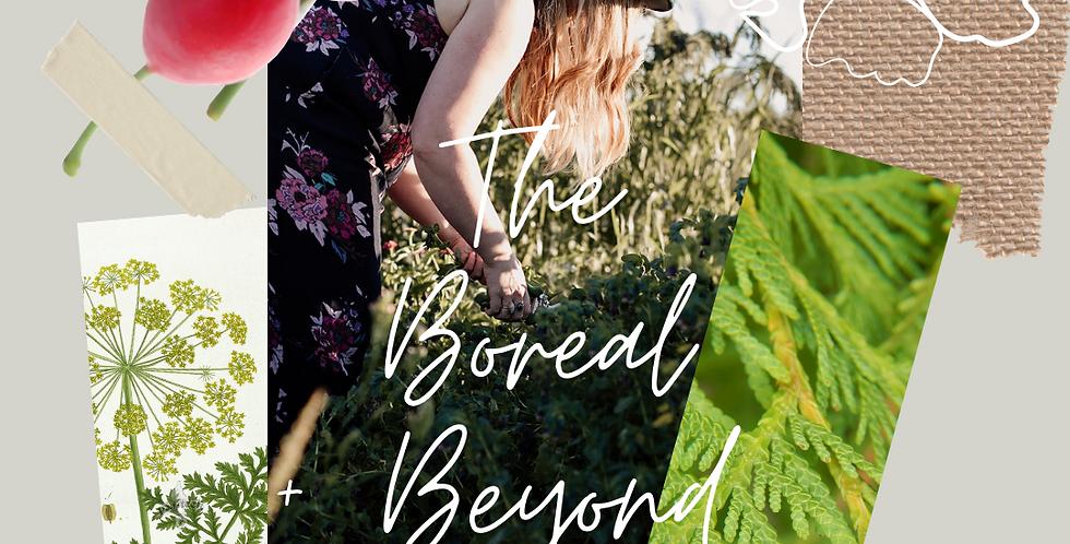 The Boreal + Beyond