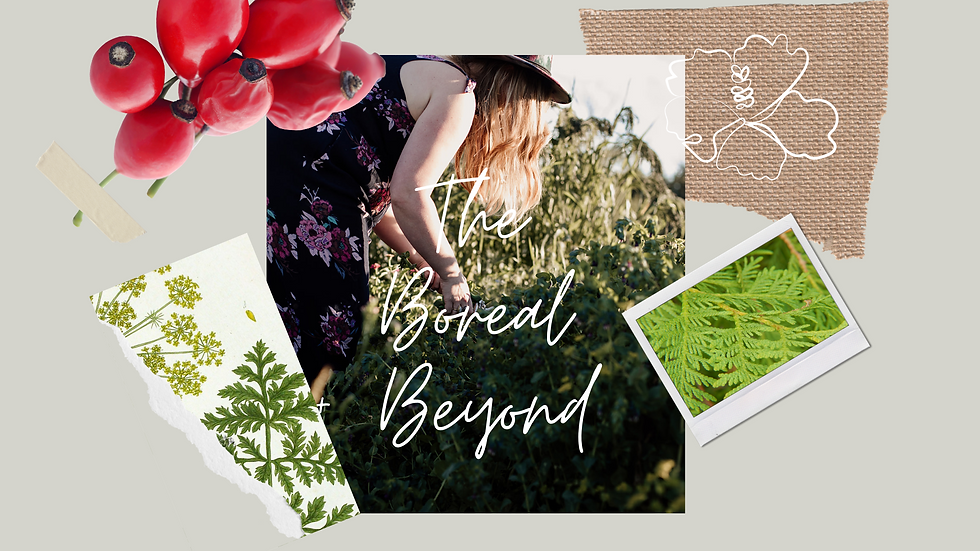 boreal and beyond cover.png