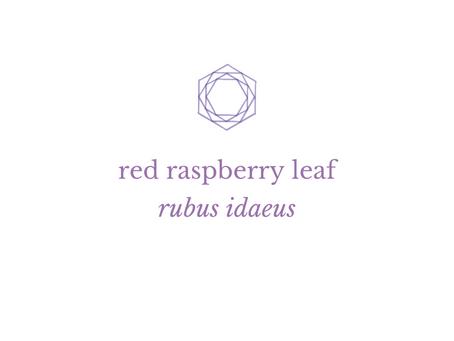 Herbal Wisdom: Demystifying Red Raspberry Leaf