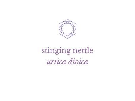 Herbal Wisdom: Stinging Nettle