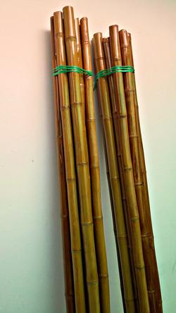 Bambucillo