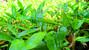 ¿QUÉ HACER PARA TENER UN VIVERO DE BAMBÚ? Tips básicos para implementar un vivero de bambú