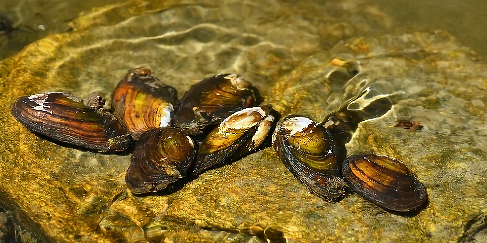 NS Ocean Institute: How C02 and pH levels relate to aquaculture and wild harvest of seafoods