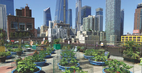Rooted in the hood – the community gardens of New York City