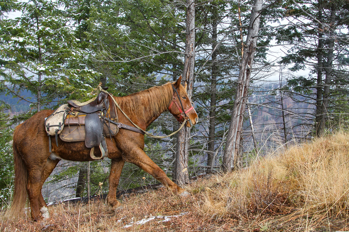 KSVISIONS-Big_Red_The_Horse_Posing_On_Mo