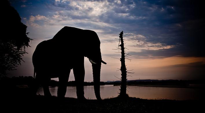 KSVISIONS-African_Elephant_Zimbabwe_Zamb