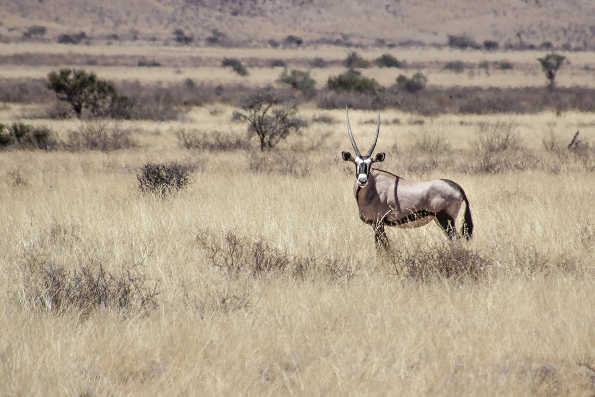 KSVISIONS-Andrew_Shelby-Sable-Namibia-Af
