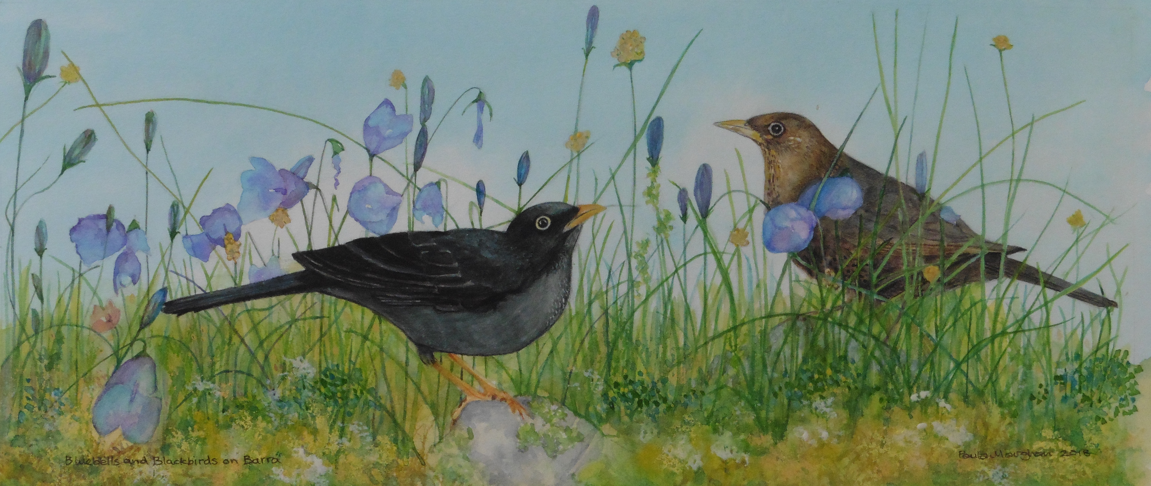 Bluebells and Blackbirds on Barra