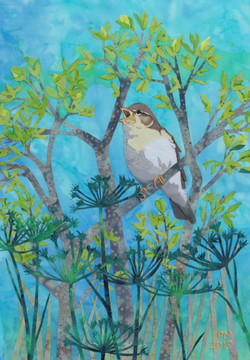 Willow Warbler by Paula Maughan