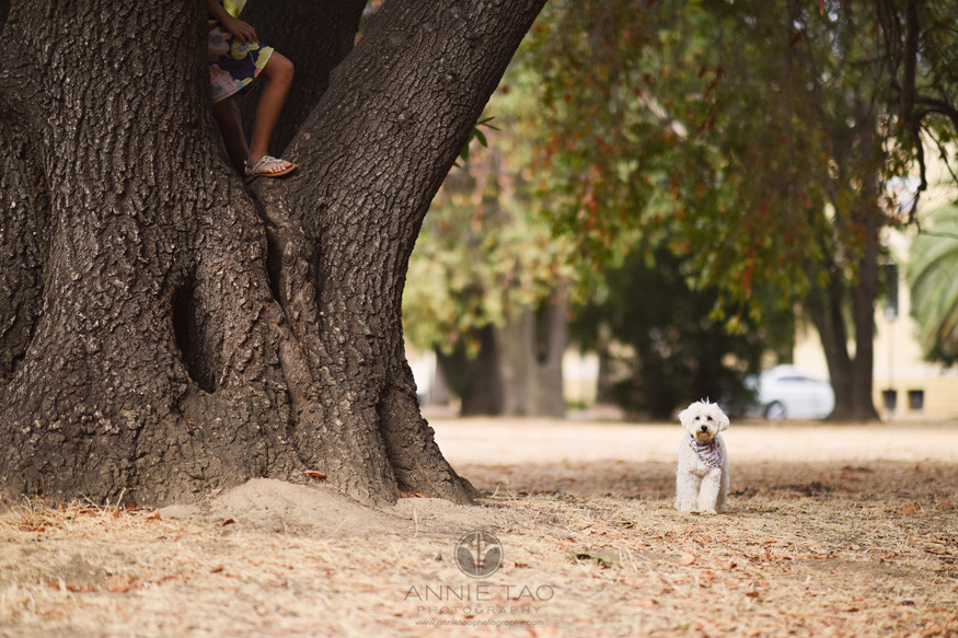 Bay-Area-lifestyle-pet-photography-fluffy-white-dog-looking-for-girl