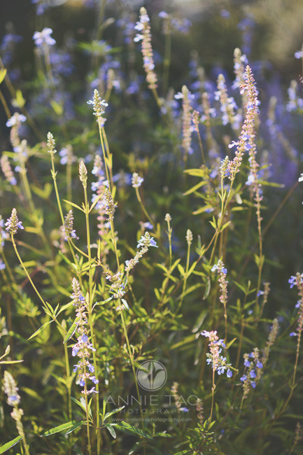Bay-Area-San-Francisco-lifestyle-photography-flowers-in-garden