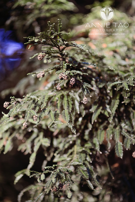 East-Bay-lifestyle-photography-close-up-of-pine-tree